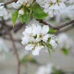 Rozkwitaj na wiosnę